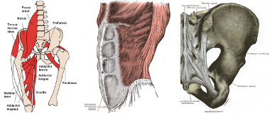anatomical images